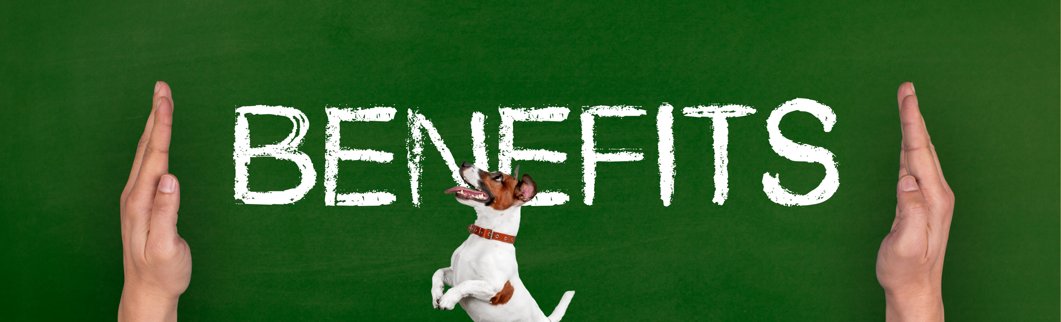Employer sponsored healthcare – for your pet?